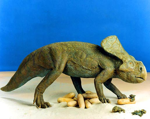 Protoceratops and nest